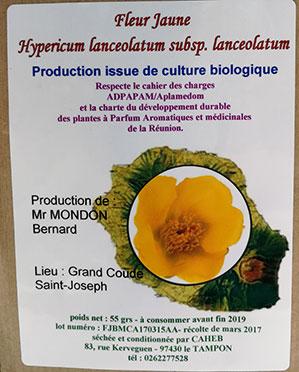 Tisane pays fleur-jaune